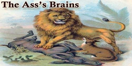 The Ass's Brains