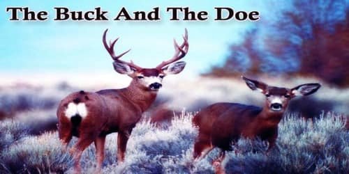 The Buck And The Doe