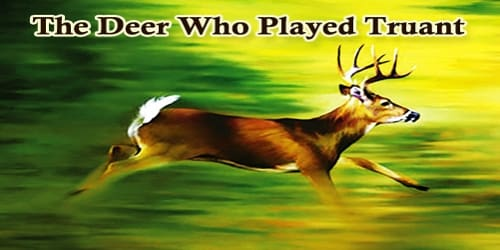 The Deer Who Played Truant