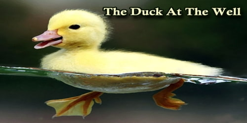 The Duck At The Well
