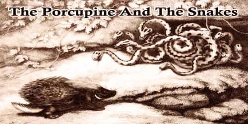 The Porcupine And The Snakes
