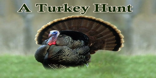 A Turkey Hunt