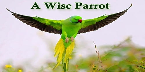 A Wise Parrot