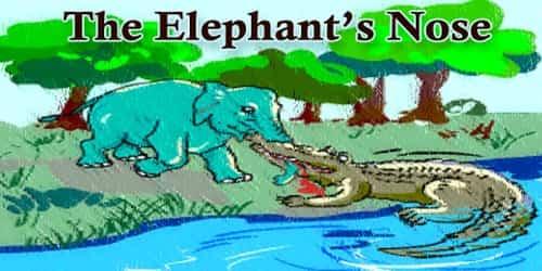 The Elephant's Nose