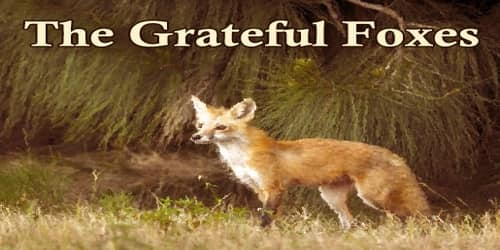 The Grateful Foxes