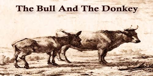 The Bull And The Donkey