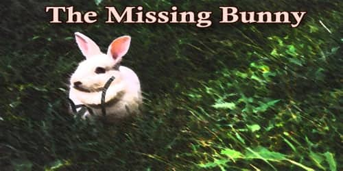 The Missing Bunny