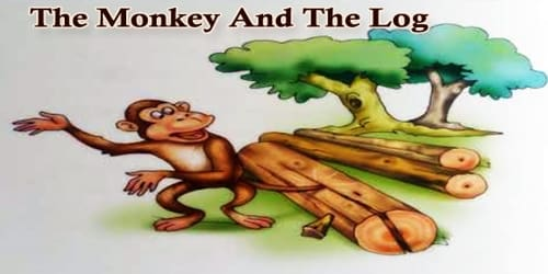 The Monkey And The Log
