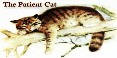 The Patient Cat