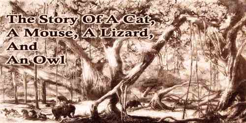 The Story Of A Cat, A Mouse, A Lizard, And An Owl