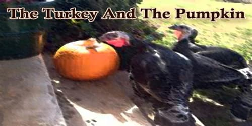 The Turkey And The Pumpkin