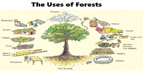 The Uses of Forests