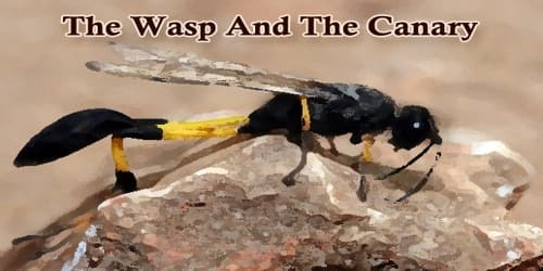 The Wasp And The Canary