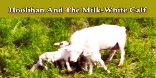 Hoolihan And The Milk-White Calf