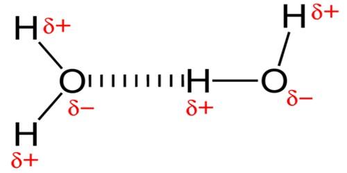 A Hydrogen Bond