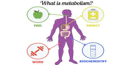 Metabolism – a chemical reaction
