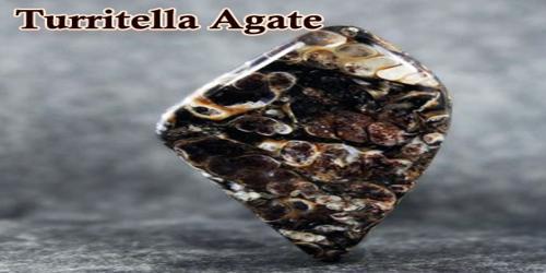 Turritella Agate