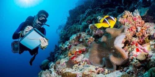 Study of Marine Biology