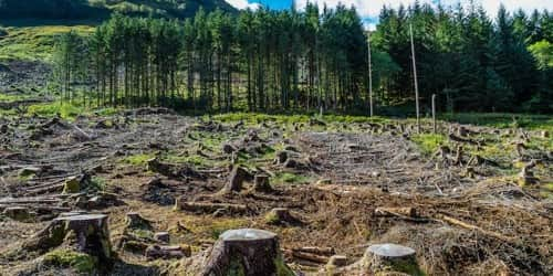 Rapid Deforestation is endangering – an Open Speech