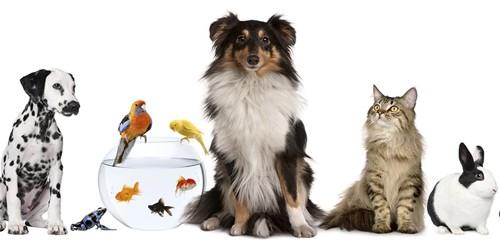 Advantages and Disadvantages of having a Pet – an Open Speech