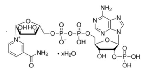 Nicotinamide Adenine Dinucleotide Phosphate (NADP)