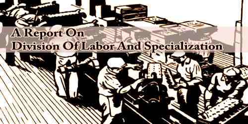 A Report On Division Of Labor And Specialization