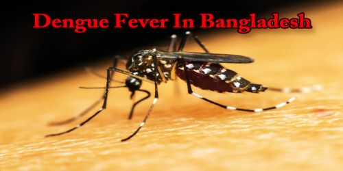 Dengue Fever In Bangladesh