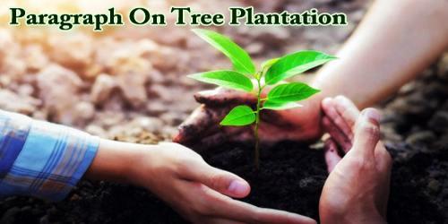 Paragraph On Tree Plantation