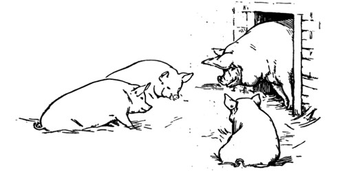 The Rhyming Pigs