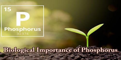 Biological Importance of Phosphorus