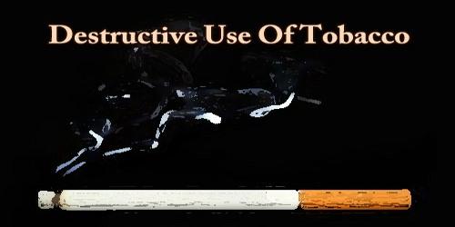 Destructive Use Of Tobacco