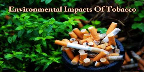 Environmental Impacts Of Tobacco