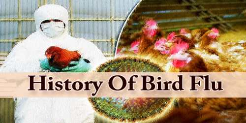 History Of Bird Flu
