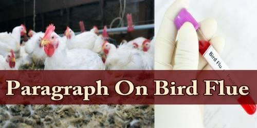 Paragraph On Bird Flue