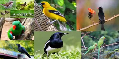 The Birds of Bangladesh