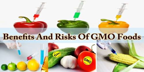 Benefits And Risks Of GMO Foods