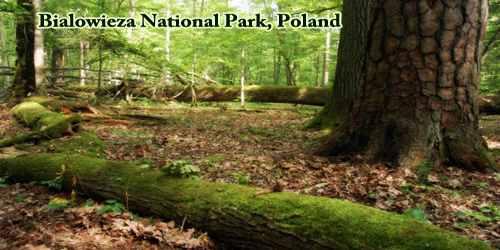 Bialowieza National Park, Poland