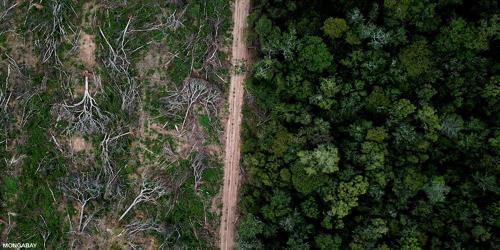 Destruction of the Rainforest