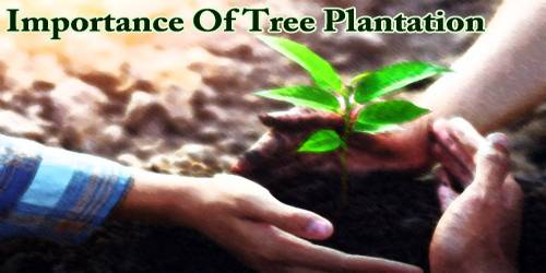 Importance Of Tree Plantation