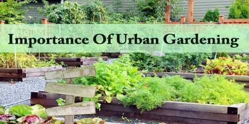 Importance Of Urban Gardening