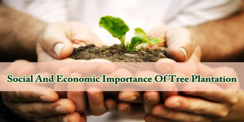 Social And Economic Importance Of Tree Plantation