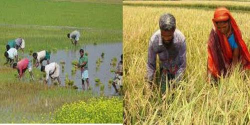 The Peasants of Bangladesh