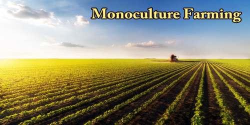 About Monoculture Farming
