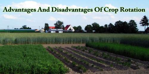 Advantages And Disadvantages Of Crop Rotation