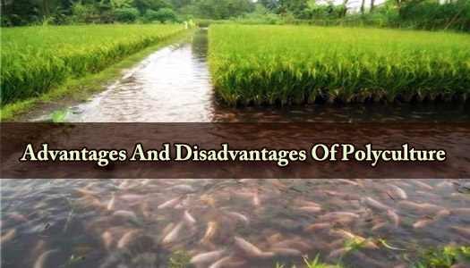 Advantages And Disadvantages Of Polyculture