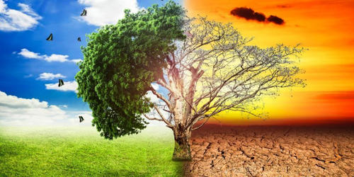 Deforestation – a Global Warming