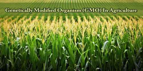 Genetically Modified Organism (GMO) In Agriculture