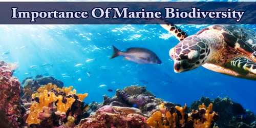 Importance Of Marine Biodiversity