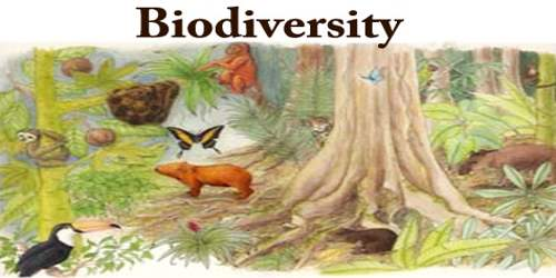 Paragraph On Biodiversity
