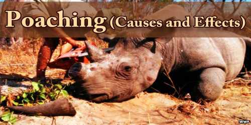 Poaching (Causes and Effects)